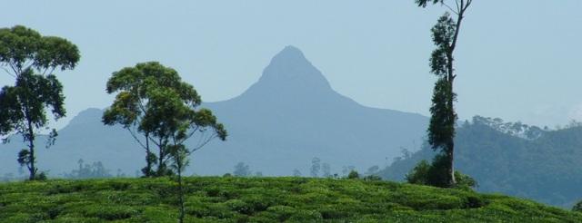 Adam's Peak, seen from Ratnapura